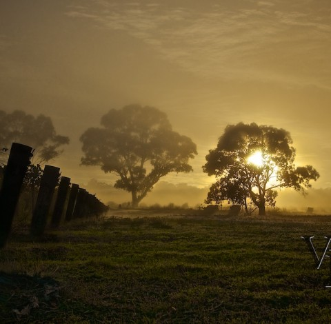 Misty morning photography Lyndoch Barossa Valley