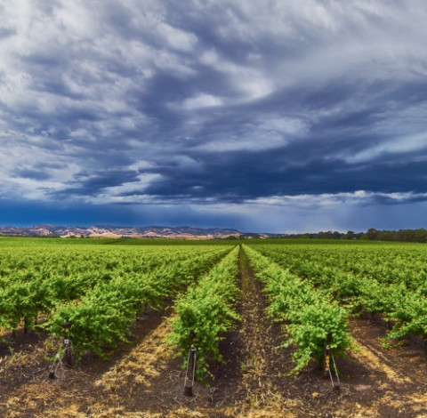 Barossa Valley Storm
