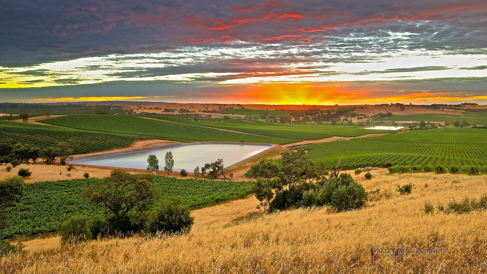 Lyndoch Barossa Vineyard sunset